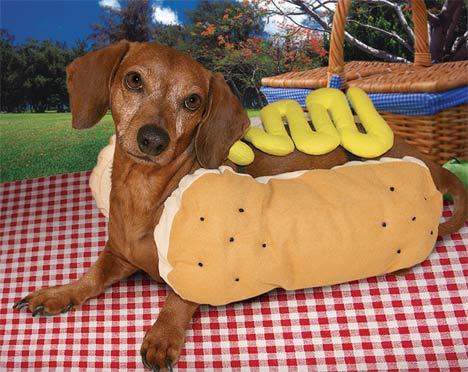 10 Sausage Dogs Dressed as Wieners for