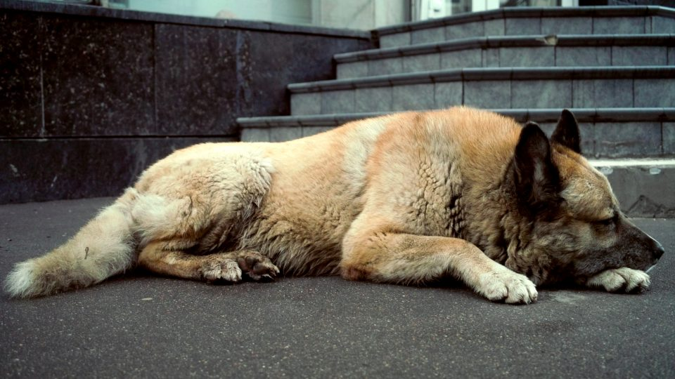 Rover Com Recommends 15 Ways To Help Homeless Dogs The