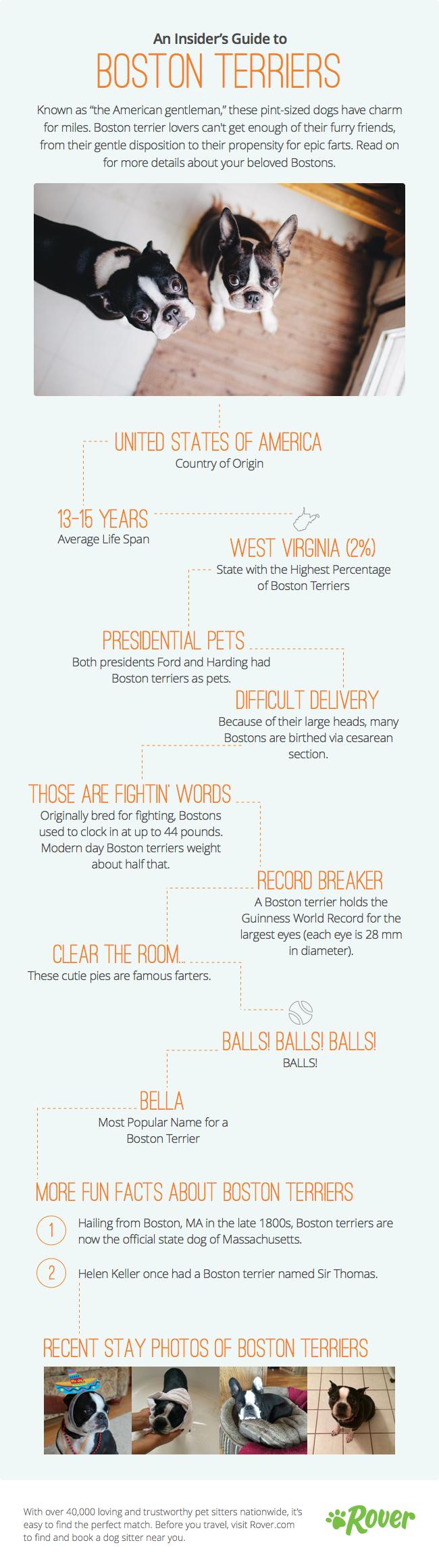 Blog Breed Info - Boston Terrier