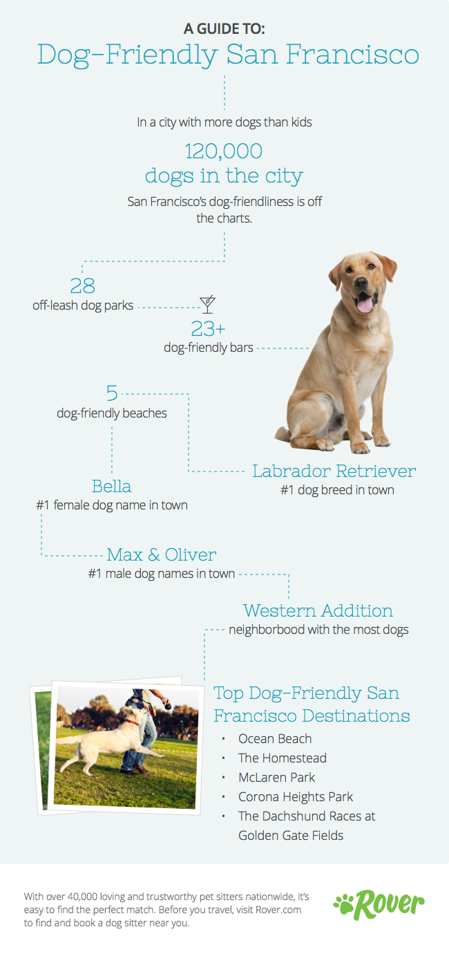The Ultimate Guide for San Francisco Dogs | The Dog People