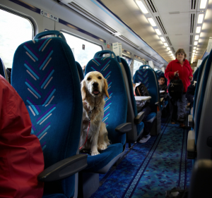 If you're wary about flying your dog in the cargo hold of a plane, you could pick an alternate means of travel—like a train!