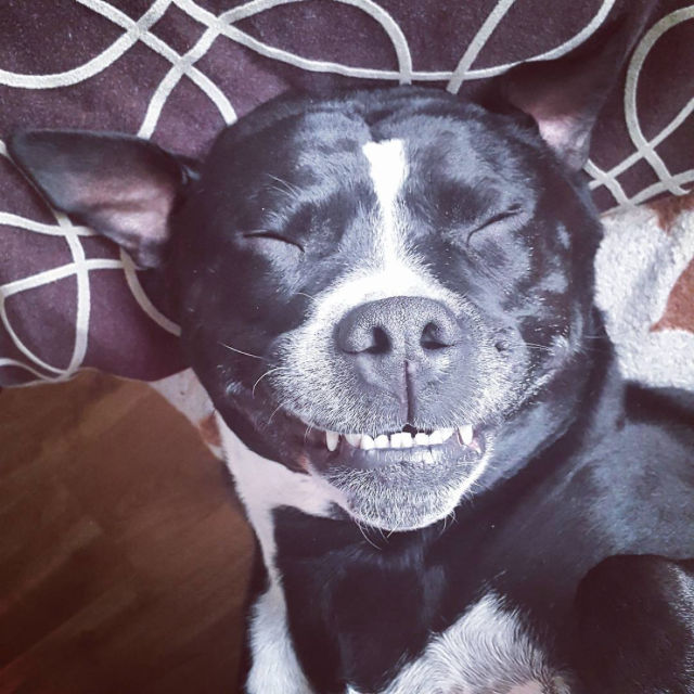 https://instagram.com/p/6FQ5p6Bzg4/?taken-by=dante_the_staffy