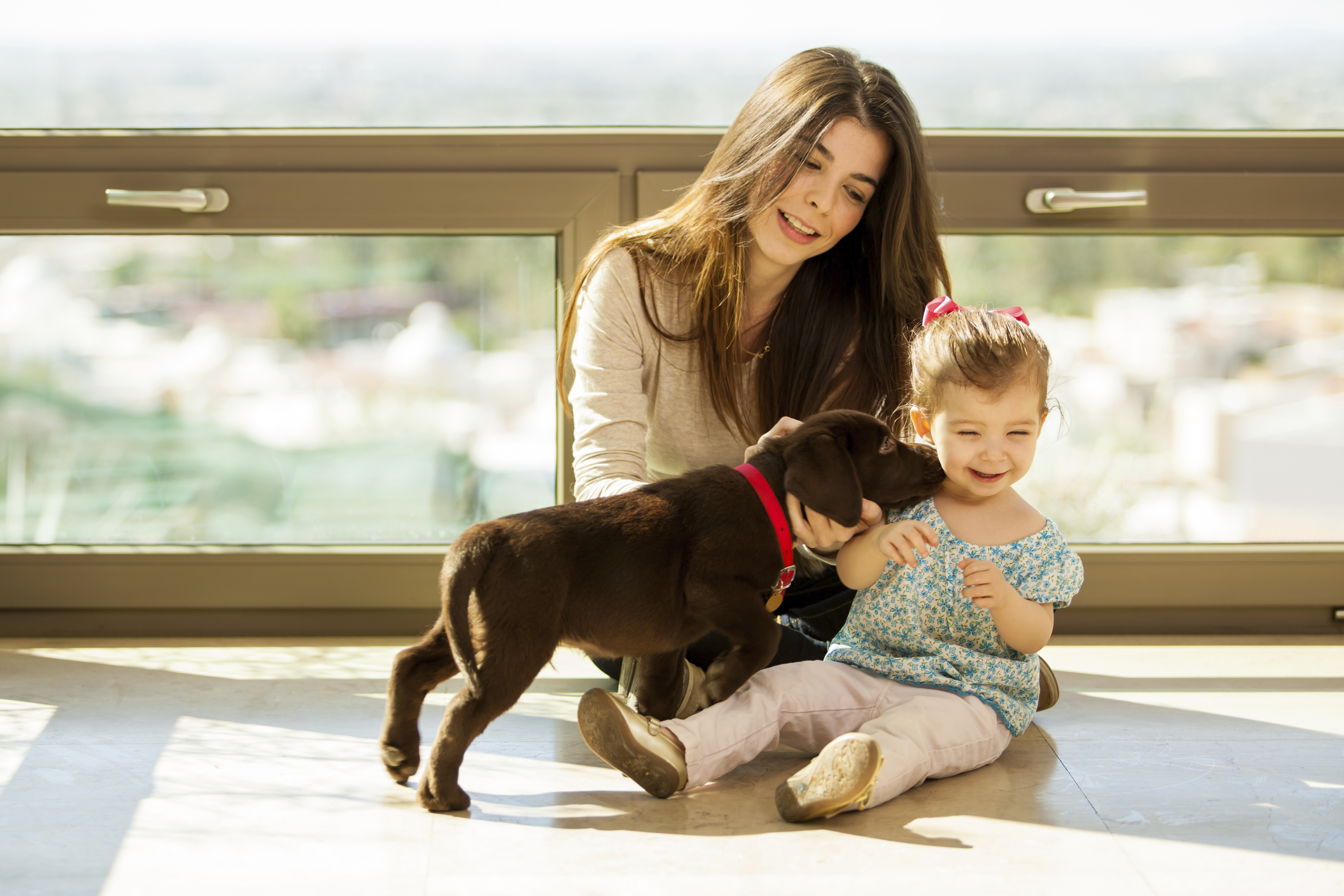 How To Keep Interactions Between Dogs And Kids Safe