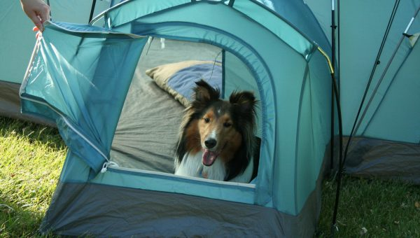 Top 4 Dog-Friendly Campgrounds Near Las Vegas