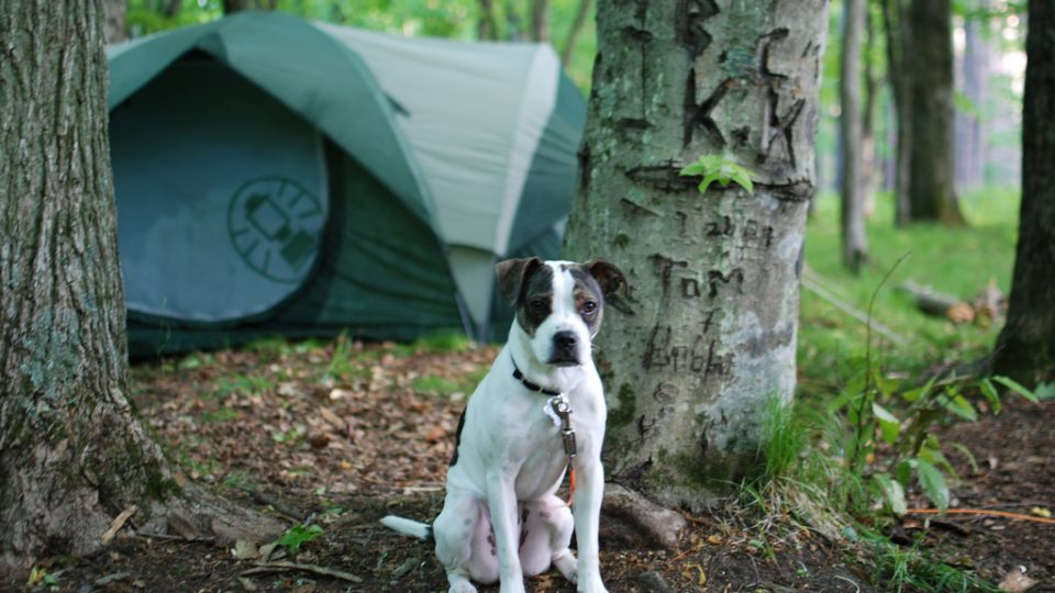 7 Tips For Camping With Your Dog The Dog People By Rover Com