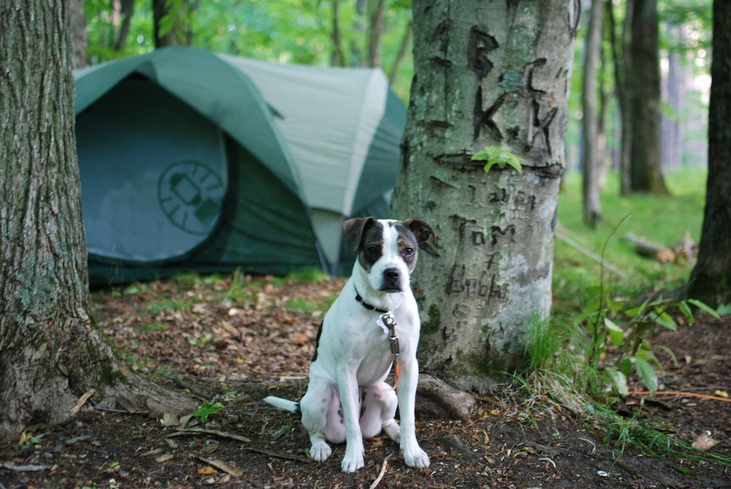 7 Tips for Camping with Your Dog | The Dog People by Rover com
