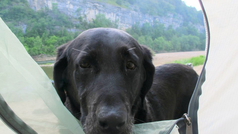 Dog Friendly Camping Near Seattle