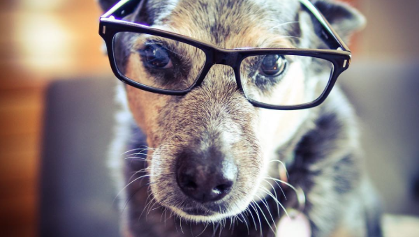 The Top 10 Smartest Dog Breeds