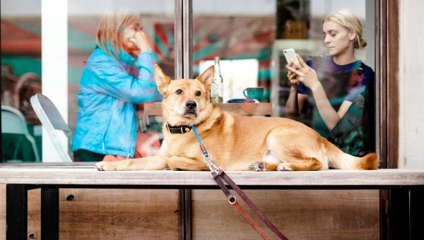 Top 11 Dog-Friendly Seattle Restaurants
