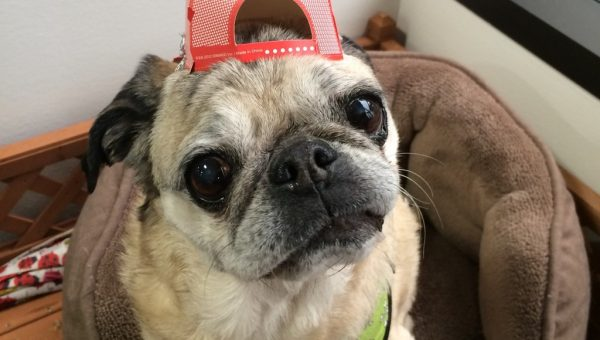 9 Inspiring Senior Dogs Who'll Make Your Day