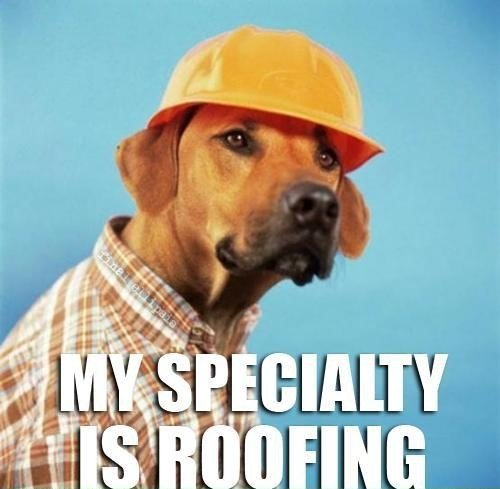 dog meme roofing