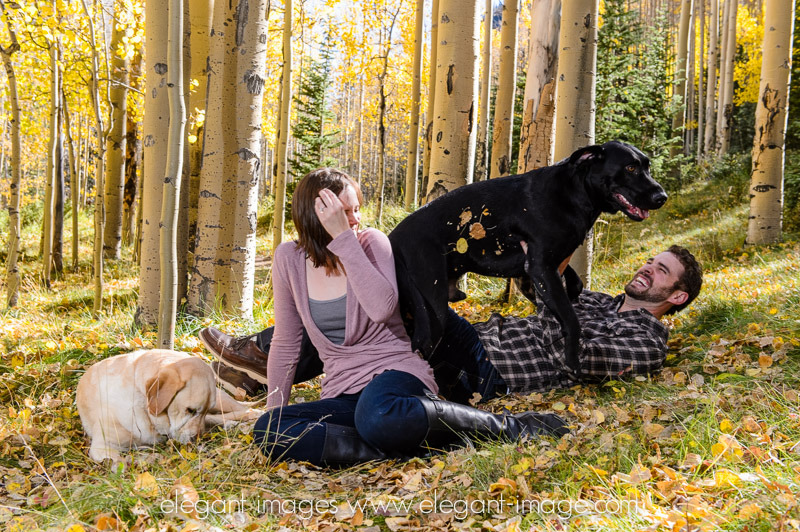 dog wrestling elegant images photo
