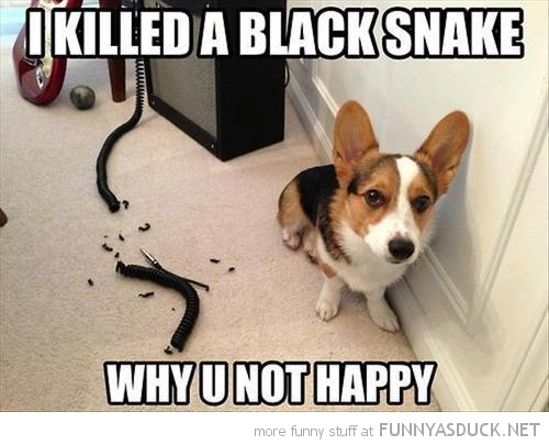http://funnyasduck.net/wp-content/uploads/2013/03/funny-chewed-guitar-wire-dog-killed-black-snake-pics.jpg