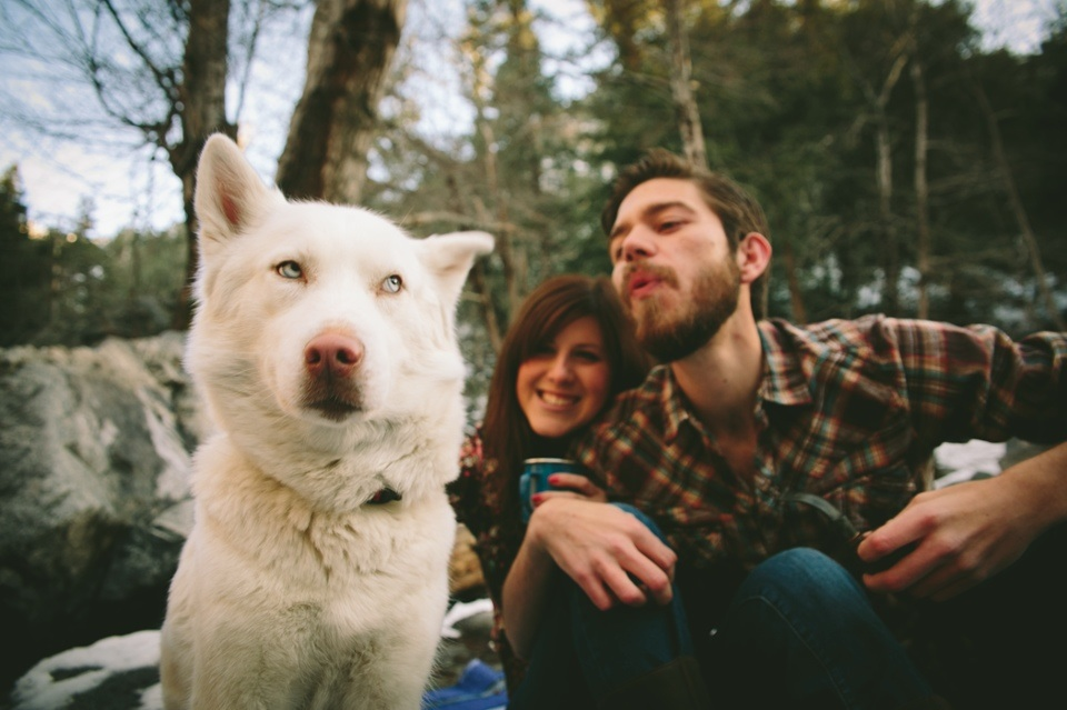 husky dog eyeroll engagement photo