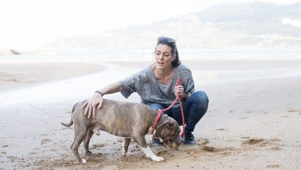 Top 14 Dog-Friendly Beaches in San Francisco