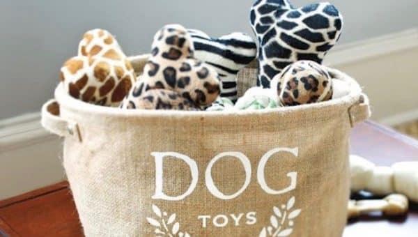 DIY : Fabriquez des objets pour votre chien à la maison