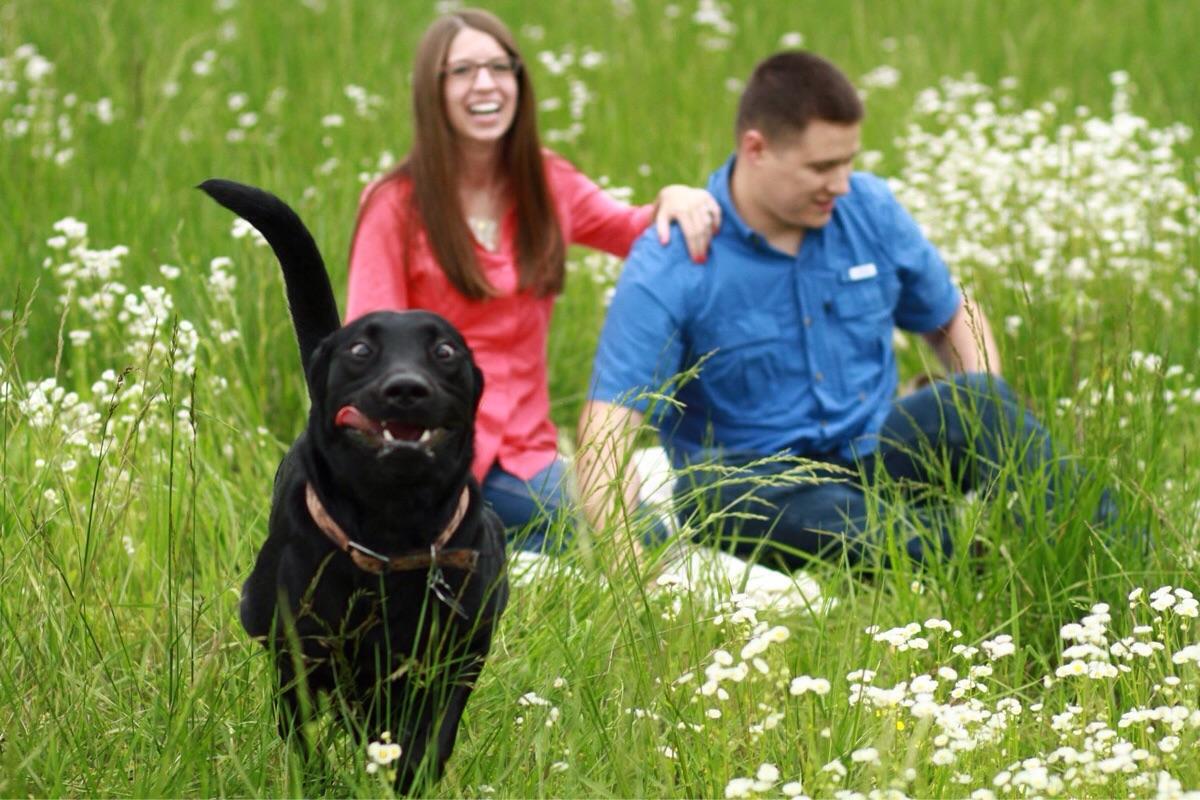 Majestic hound graces photo