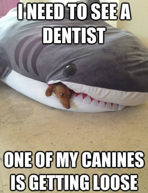 shark dog joke