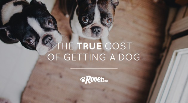 The True Cost of Getting a Dog