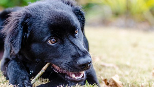 7 Sensible Dog Chews for Serious Chewers