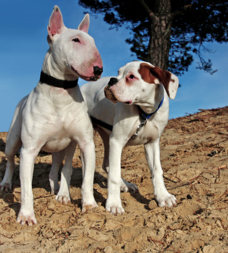 6 of the best dog breeds for families for Best dog breed for you