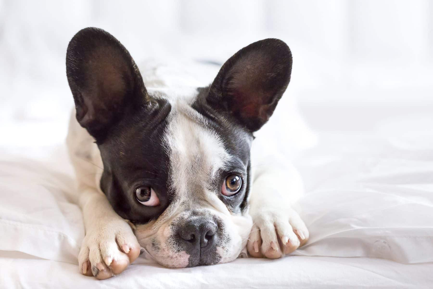 15 Signs That Your Dog Is Stressed The Dog People By Rover Com