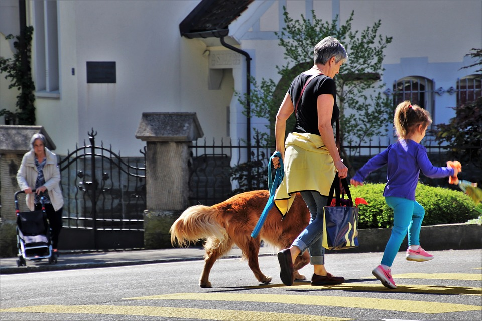 A retiree walks a Rover dog with her granddaughter.