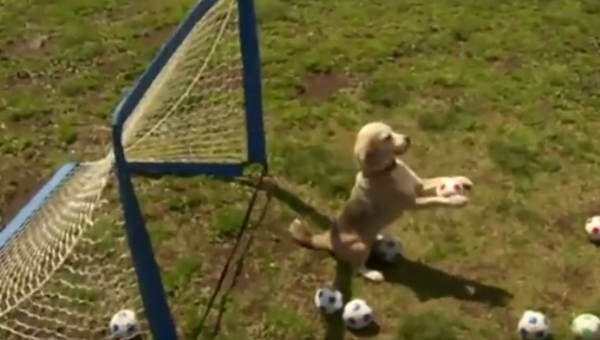 WOW! Dog Breaks World Record for Most Balls Caught in Paws