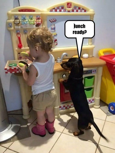 dachshund and toddler in the kitchen