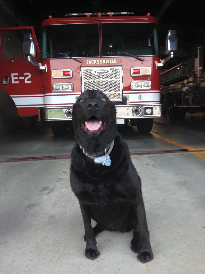 Smokey via Jacksonville Fire Department
