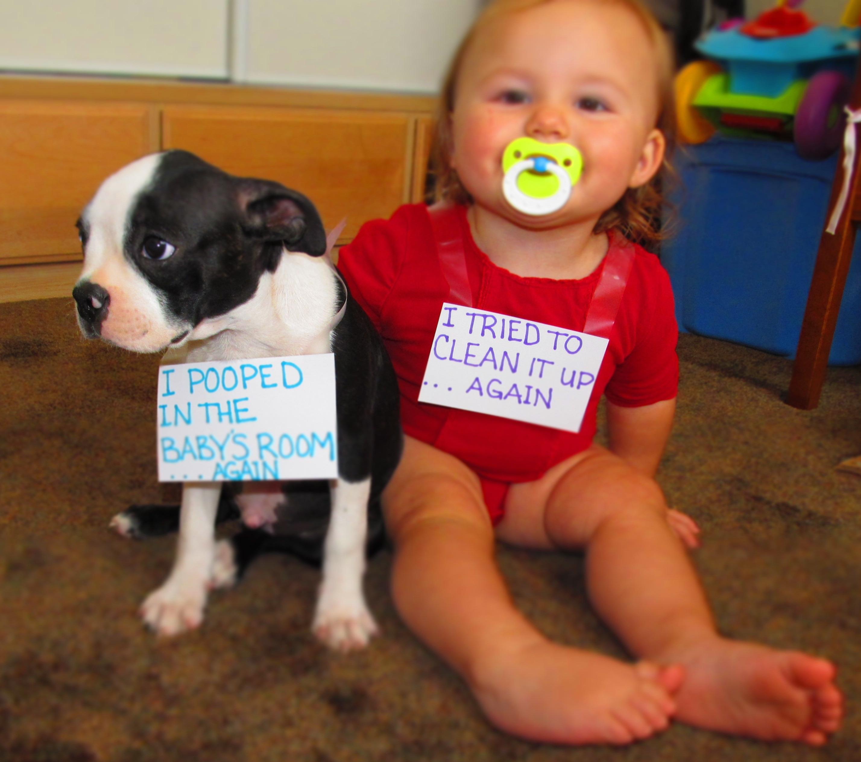 french bulldog pooped toddler