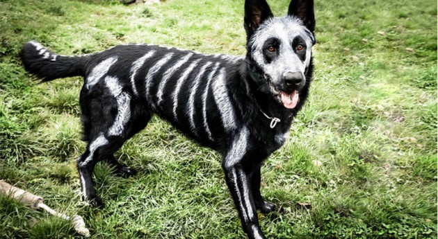 What's the Best Dog Halloween Costume of All Time? [Quiz]