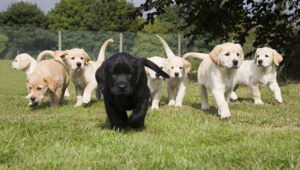 The 50 Best Black Dog Names for 2018