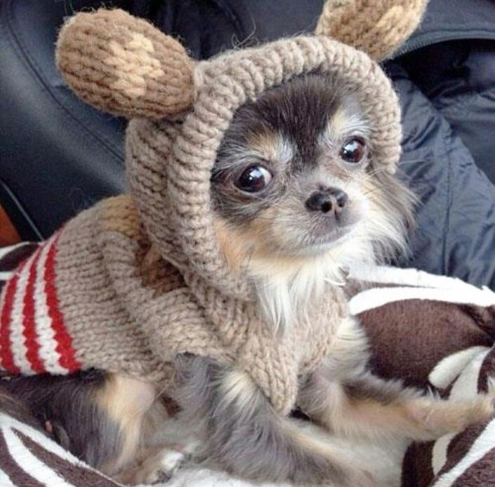 source: Pet Knits