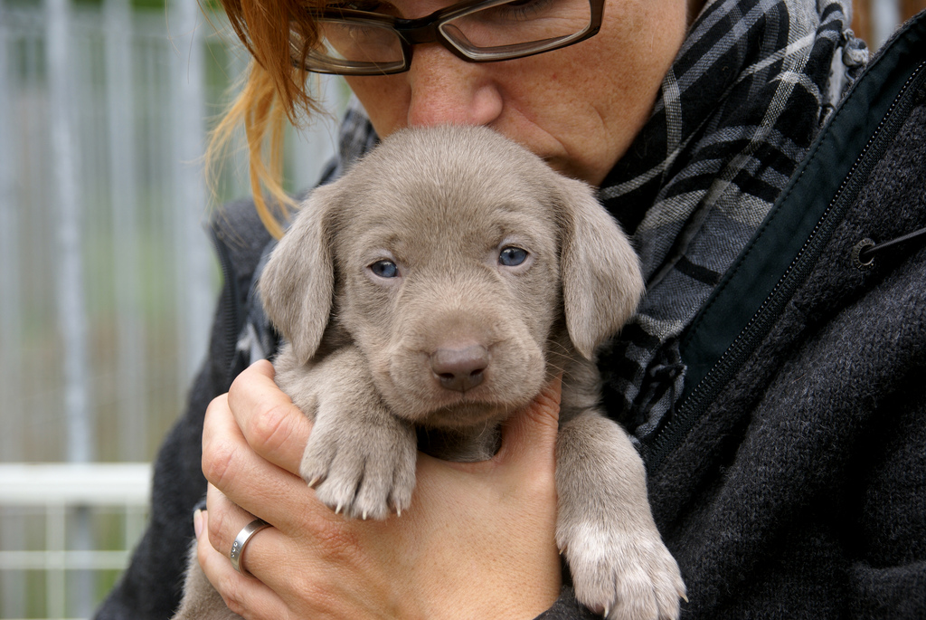 Puppies for Rent? The Surprising World of Puppy Temps | The Dog