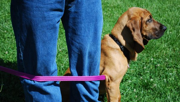 9 Must-Read Dog Walking Tips That Should Come with Every Leash