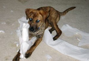 puppy-paper-towel