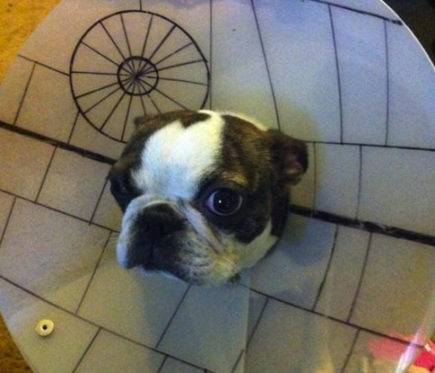 10 Pet Parents Who Went Above and Beyond with the Cone of Shame | The Dog People by Rover.com & 10 Pet Parents Who Went Above and Beyond with the Cone of Shame ...