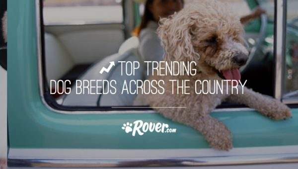 The Trendiest Dog Breeds Across America