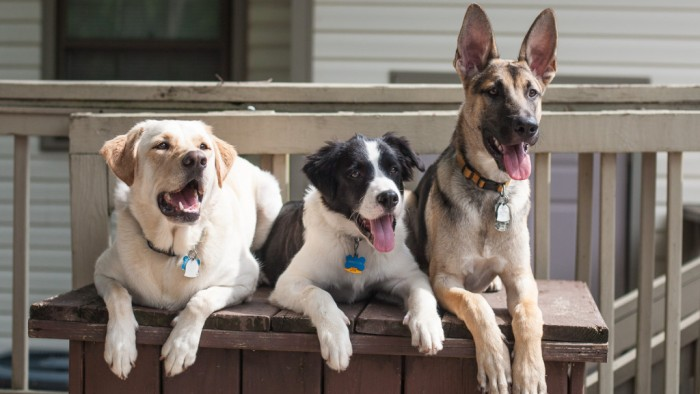 how to become a dog sitter on rover