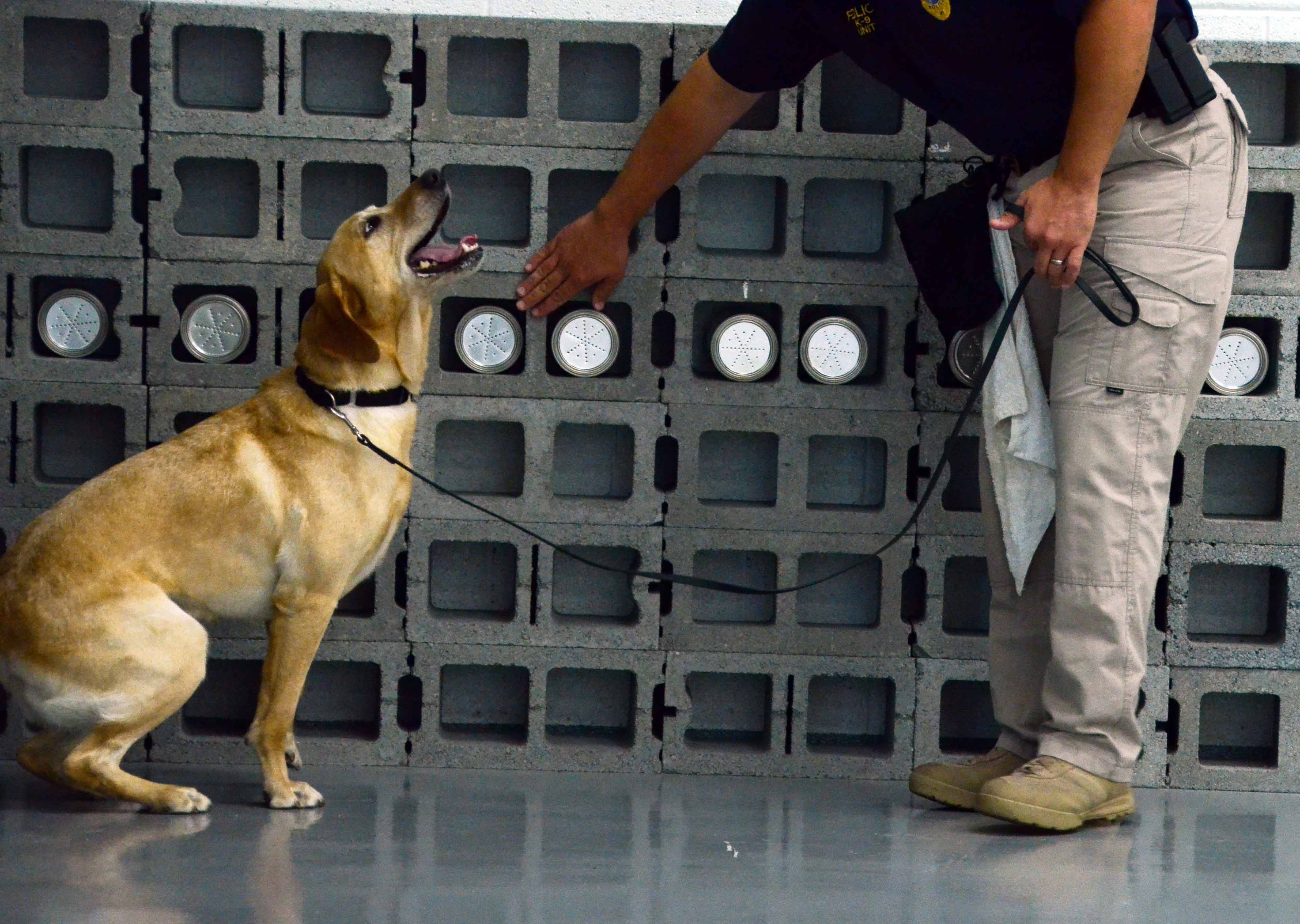The CIA Reveals Their Top 10 Dog Training Tips