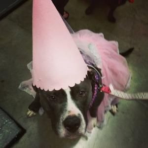 adopt-princess-pit