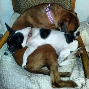 adopt-spooning-pair