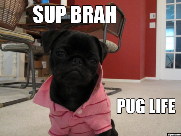 douchebag-dog-pug-life