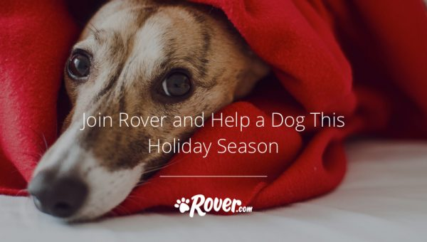 Join Rover and Help a Dog This Holiday Season
