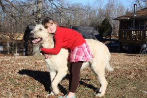 """Irish Wolfhounds are gentle giants,"" breeder Sarah Halbeck says. ""They are fantastic with children and as therapy dogs."""