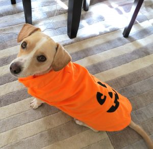 If you absolutely must dress up your dog, try a simple costume like the one pictured here. If your dog is uncomfortable, snap your picture and take off the costume.