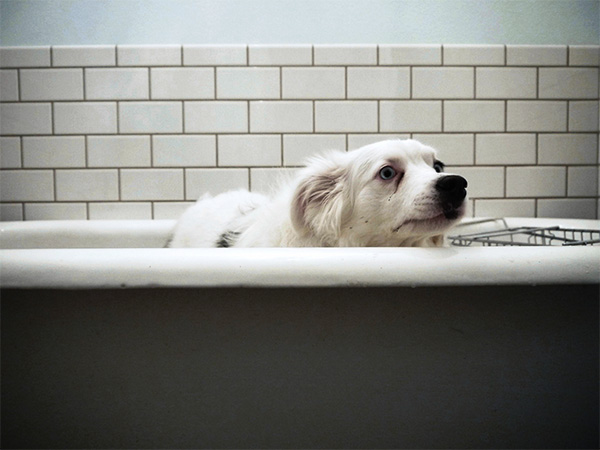 sad bathtub dog