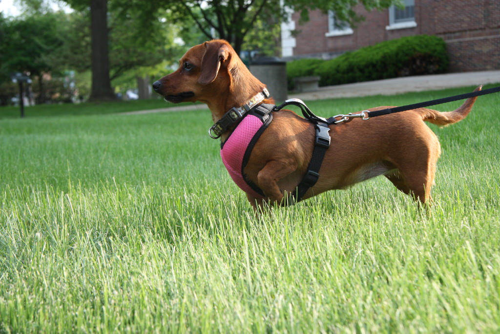 Dog Walking Safety The Dog People By Rover Com