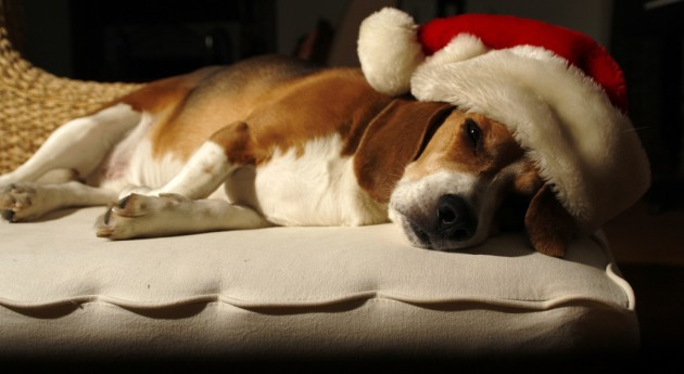7 Holiday Hazards for Dogs (and How to Help)